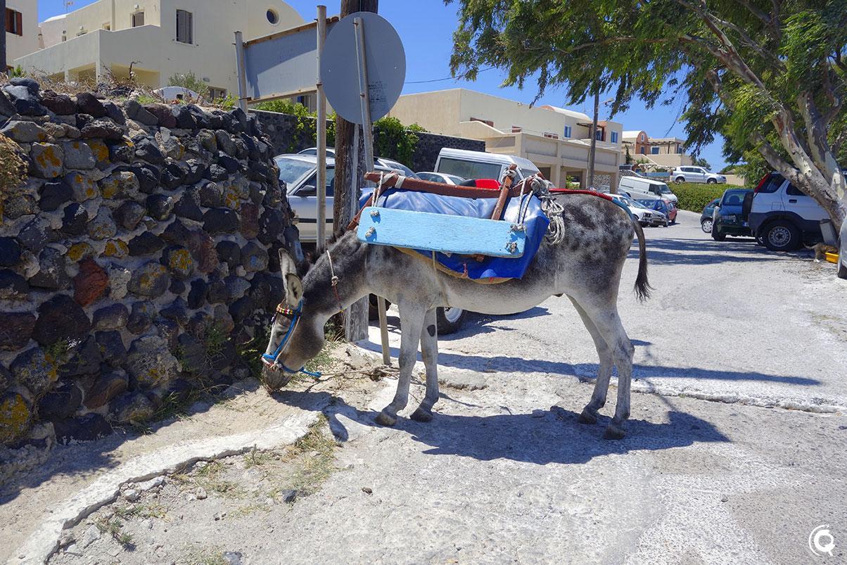 Un âne à Finikia
